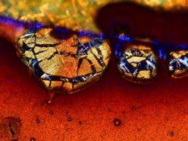 19 bức ảnh dưới kính hiển vi sẽ làm bạn bất ngờ